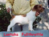 LANTAKA FULLTHROTTLE