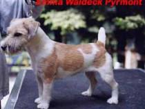 EMMA WALDECK PYRMONT